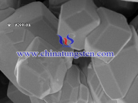 tungsten carbide powder SEM image
